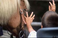 bambino in carrozzina che saluta il suo cavallo prima di montare in sella ed iniziare la sua attività in equitazione integrata