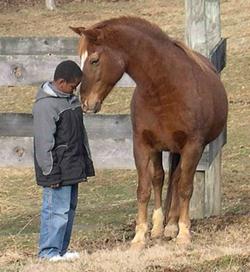 relazione uomo cavallo