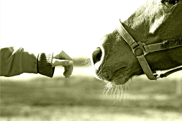 empatia a cavallo