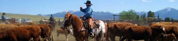 lavorare con i cavalli
