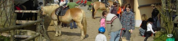 avvicinamento al cavallo