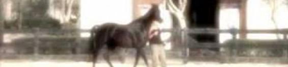 desensibilizzazione del cavallo