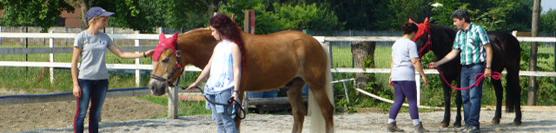 corso-mediatori-equestri