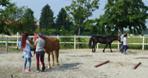 corso mediatori equestri