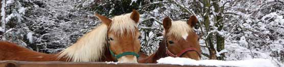 cavalli-e-inverno
