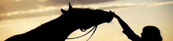 cavallo-e-depressione