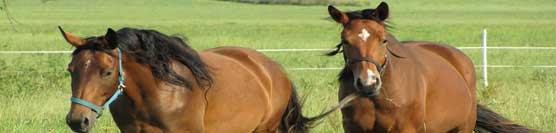benessere-del-cavallo