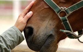 bambino-e-cavallo