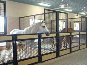 box-moderni-per-cavalli