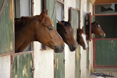 cavalli-in-box