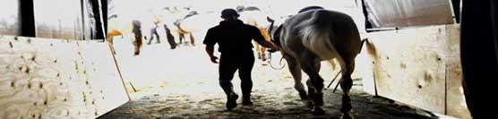 conduzione-del-cavallo