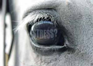 stress-del-cavallo