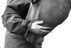 psichiatria-e-cavalli