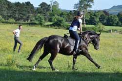 lezione-di-equitazione
