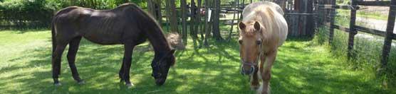 cavalli-anziani-a-riposo