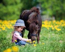 empatia-del-cavallo