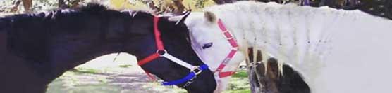 mediazione linguistica e culturale attraverso il cavallo e l'equitazione