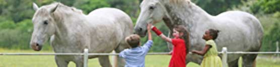 intercultura-e-cavalli