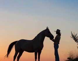 cavalli-e-relax