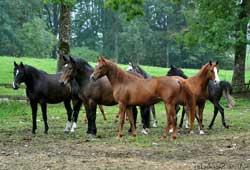 branco-di-cavalli